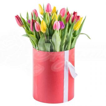 Коробочка из 35 Тюльпанов